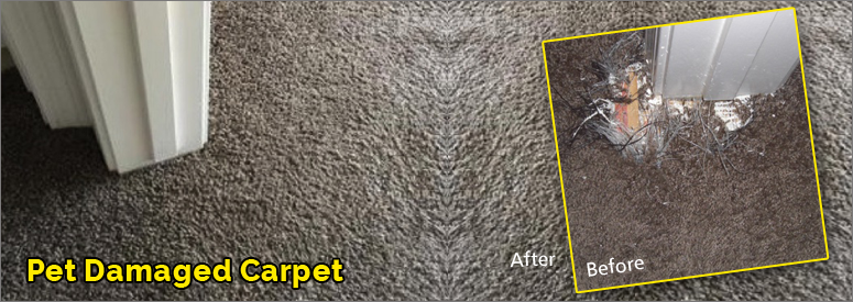 Pet Damaged Carpet Thousand Oaks